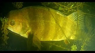 Рыбалка на реке учи в аксаково