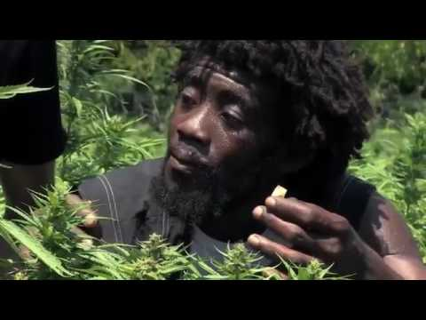 Jamaica Cannabis , Weed (Documentary)