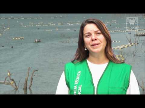 SENAR em Campo: Aquicultura – Como realizar o povoamento na piscicultura