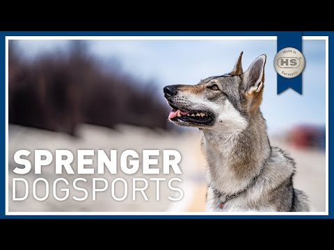 HS SPRENGER Hundesport - Dog Sports / Dog Equipment