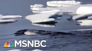 How Arctic Warming Affects You Right Here And Now | Velshi & Ruhle | MSNBC