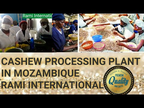 Cashew Nut Processing Machines