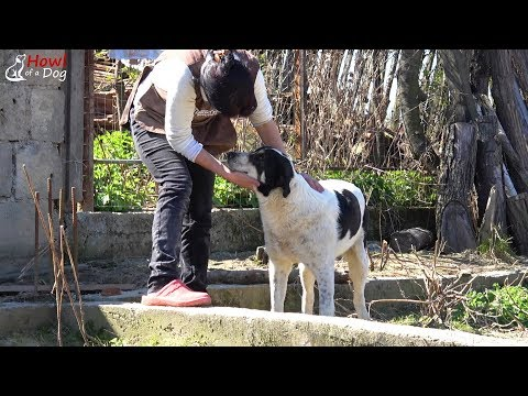 Helping Dogs In A Small Village And Bringing Hope For A Better Tomorrow | Howl Of A Dog Rescue