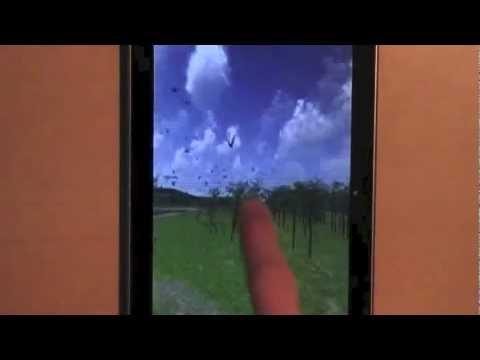 Video of Bird Flight Live Wallpaper
