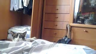 Смешной котик! Funny cat 2018