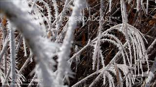 12-14-2018 Rural Hazleton, Iowa-Hoarfrost or Rime Icing