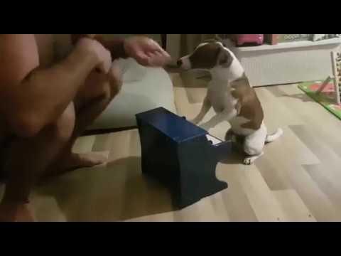 прикол . собака играет на пианино