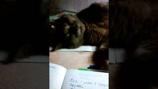 Кошка сходит с ума!