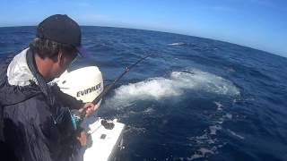 preview picture of video 'Tuna fishing Portland Victoria - Bagout Charters - 2014'