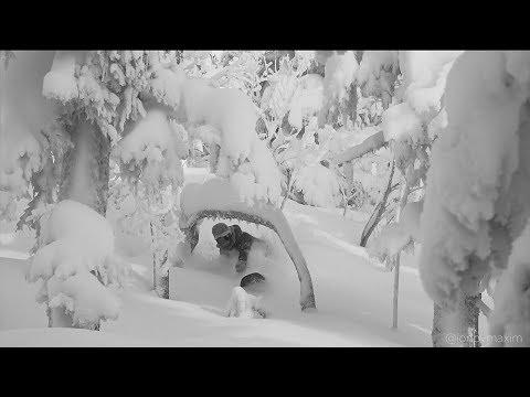 , title : 'Живи Катаясь – Шерегеш | Snowboarding in Siberia [ENG sub.]'