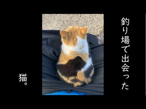 Three Japanese fishermen make friends with a cat