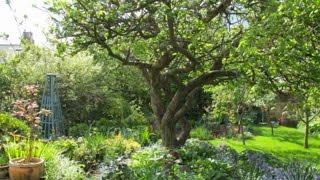 Planning A Fruit Garden - How To Make A Low Maintenance Fruit Garden