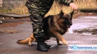 Центр кинологической службы УМВД России по Тверской области готовит настоящих собак-ищеек