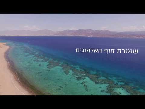 צפו ב-3 דקות נפלאות של טבע ישראלי משובח