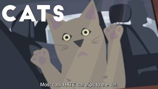 Every cat loves car trips! Right??