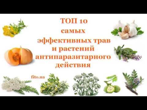 Травы от глистов и паразитов - Топ 10