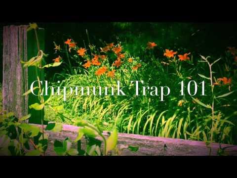Chipmunk Trap 101