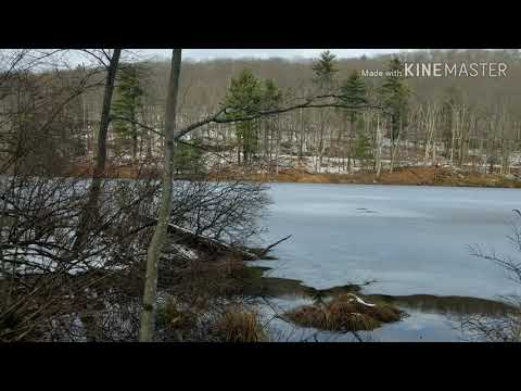 Appalachian Trail, MA 23-Benedict Pond, Mass., 4 miles (Out & back) 11/19