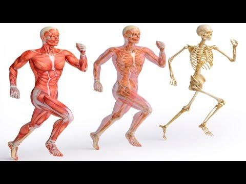 Pembakaran lemak gizi olahraga