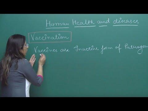 Les moyens des helminthes chez les adultes du comprimé