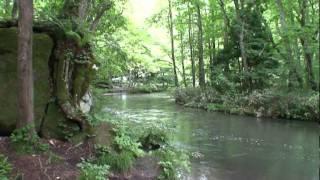 奥入瀬渓流を行く-青森県-.mpg