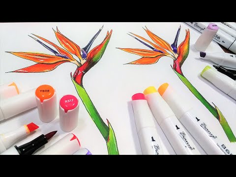 Alcohol Marker Part 2: Coloring the Bird of Paradise Flower (Free image download!)