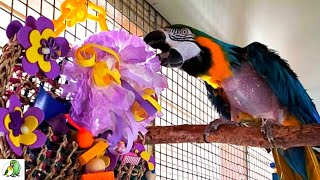 Bird Toy Maker Donates Parrot Toys to Rescue Birds in Need