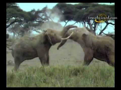 Kenya Safari Vacations, Tours, Videos, Custom Packages