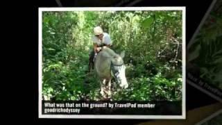 preview picture of video 'Horse Riding in Belize Goodrichodyssey's photos around San Ignacio, Belize (travel pics)'