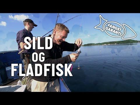 Fiskeri efter sild og fladfisk med Fangstgaranti
