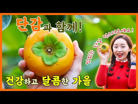 [전국을 달린다-창원] 단감과 함께! 건강하고 달콤한 가을 (2019.11.13, 수)