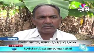 Dilip Patil's Banana Zero Budget Natural Farming Success Story