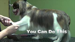 Huzzaz embed how to groom a pekingese basic trim do it yourself dog solutioingenieria Gallery