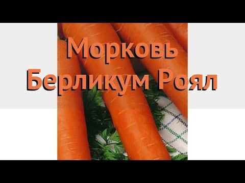 Морковь обыкновенный Берликум Роял 🌿 обзор: как сажать, семена моркови Берликум Роял