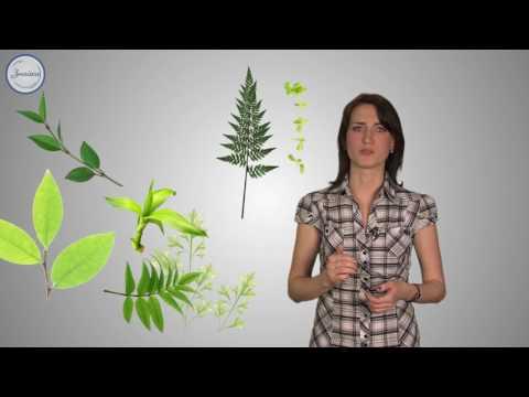 Строение растительного организма