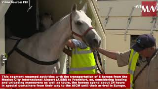 Lufthansa sees opportunity in equine transport