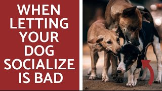 Why you shouldn't socialize your dog!