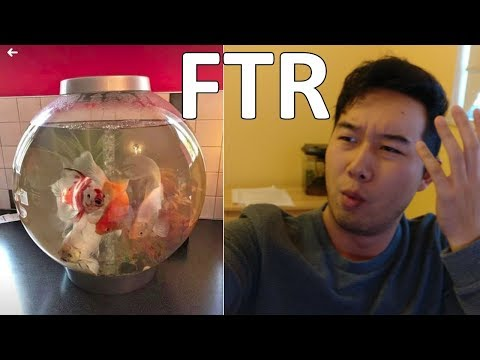 this tank is not overstocked | Fish Tank Review