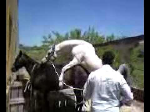 Sesso di gruppo con un cavallo