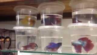 Vlog - #P5 lembrancinha peixe de verdade - papéis para silhouette - lembrancinhas em feltro