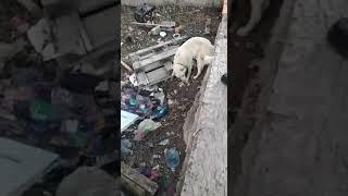 Собака попала в плен из-за новогодних фейерверков