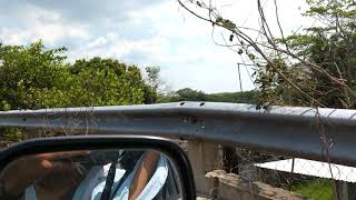 preview picture of video 'Río San Pedro en Tabasco'