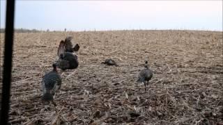 Hunting Turkey Excalibur Crossbows (1 33 MB) 320 Kbps ~ Free