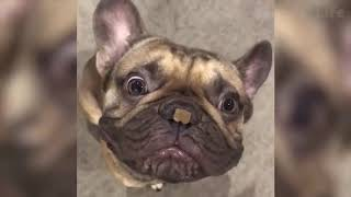 😂FUNNIEST😍DOGS🐶AND❤️CATS🐈FAILS💙COMPILATION🤪