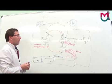 Обмен углеводов - 3 часть