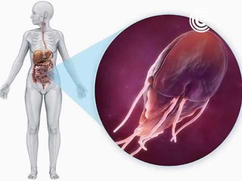A prosztatagyulladás adenoma férfiaknál tünetek kezelése