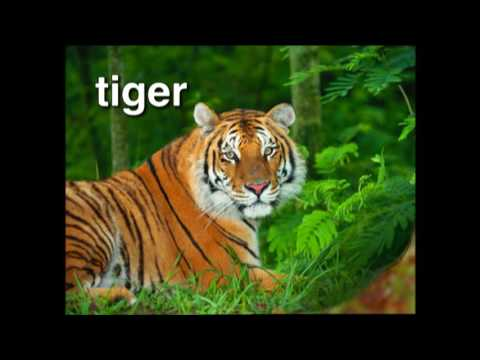 World Animal Adventure, Part 1 | Animal Videos for Kids | Baby Einstein