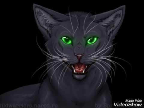 """Коты-Воители.Остролистая.Песня """"У кошки 9 жизней""""."""
