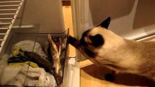 Кот ворует  рыбу с холодильника!