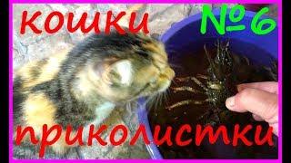 Кошки приколистки Смешные кошки обхохочешься Приколы с кошками Видео YouTube Funny Cats Video